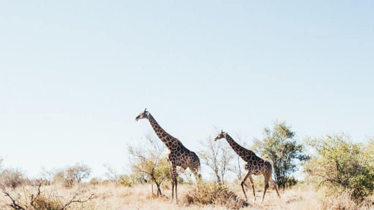 Family travel - going on safari